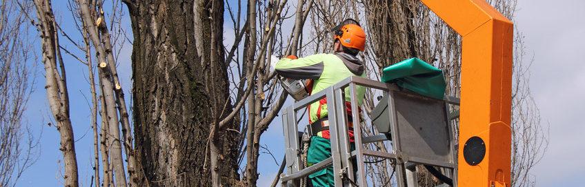 Tree Trimming Ocala fl