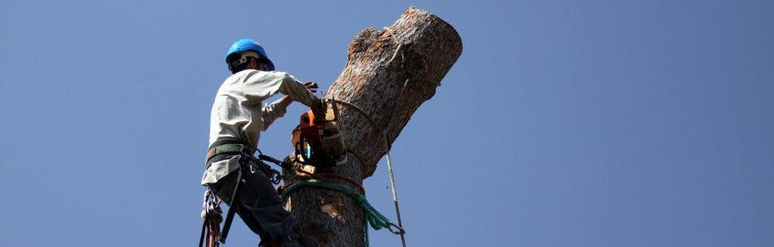 Tree Service Ocala fl